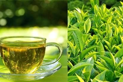 dưỡng mi bằng trà xanh