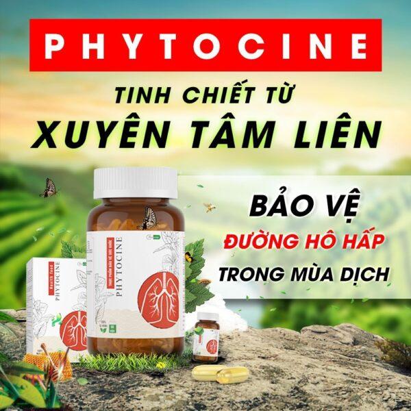 [3T Pharma] Phytocine Tinh Chiết Từ Xuyên Tâm Liên - 60 viên/ hộp 1